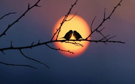 Love-Birds-Very-Beautiful-Wallpapers-in-Sunset
